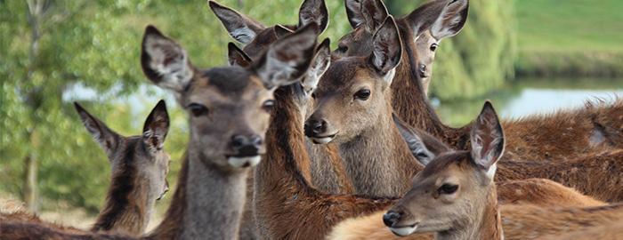 Photo élevage de cerfs